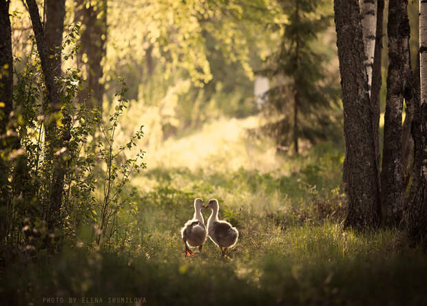 KidsWithAnimals22 Россиянка создает потрясающие фотографии своих детей с животными в деревне