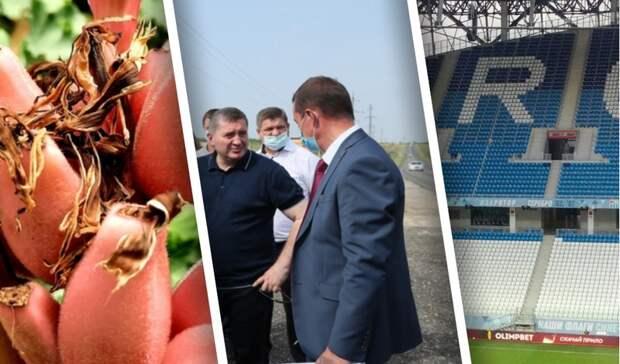 Занимательные новости Волгограда всубботу