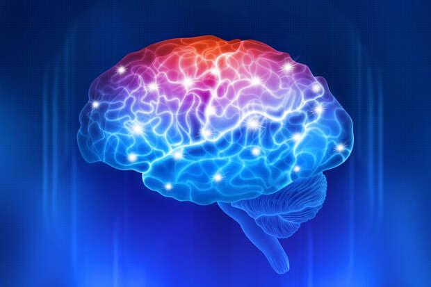 Ученые выяснили, что сексуальные намеки вызывают уникальную реакцию мозга