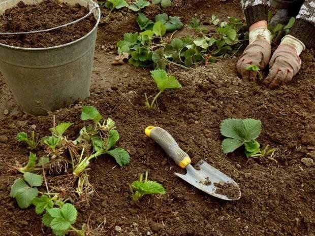Чем подкормить сад, огород и цветник в конце сезона