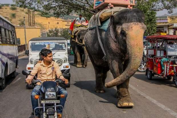 Бурное движение  в Индии