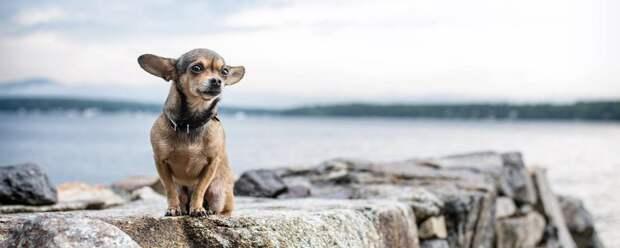 Собаки понимают даже тонкие различия в словах