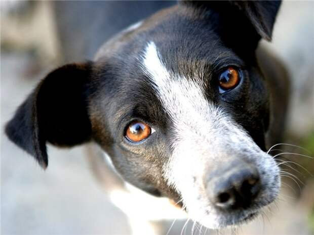 Преданность в глазах, животные, морда, собаки 1280х1024 - Обои для рабочего стола. Wallpapers