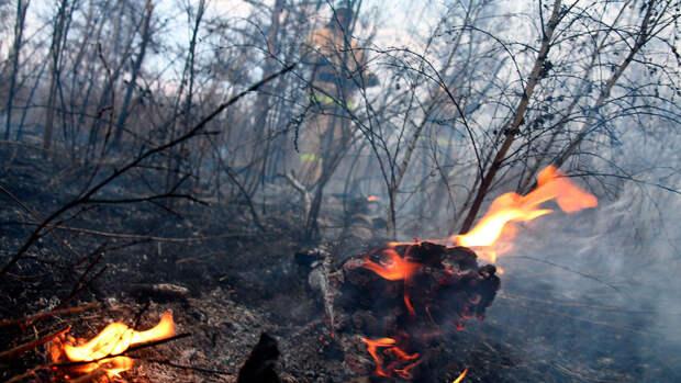 Под Омском из-за лесного пожара сгорела половина деревни