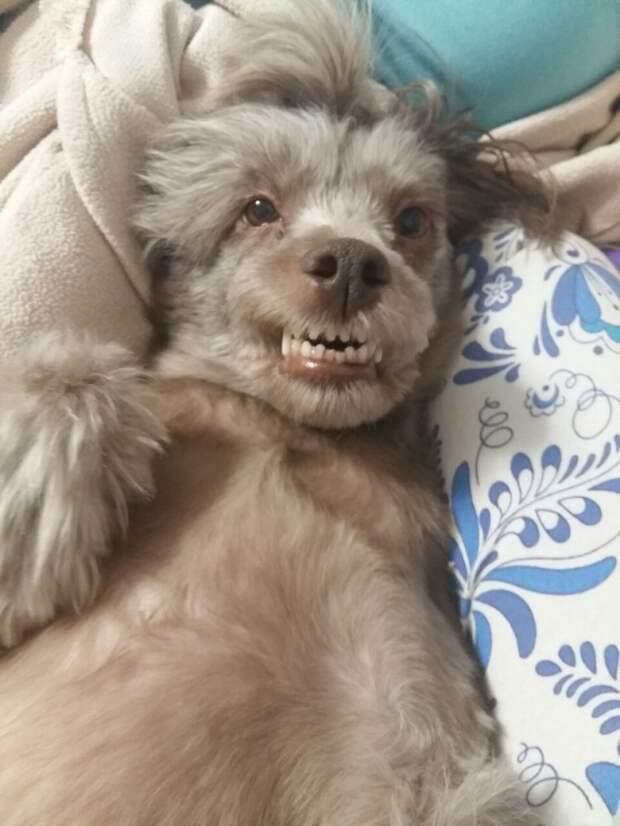 В приюте с этой сбитой собакой произошло настоящее преображение авария, приют, собака