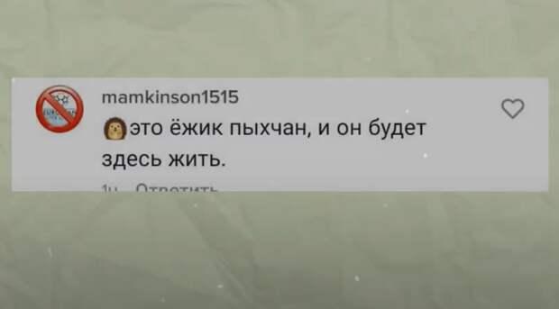 Ежик Пыхчан