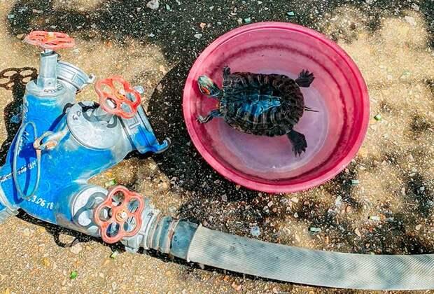 В Севастополе на пожаре спасли черепаху