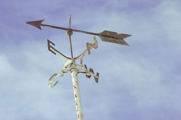 МЧС выпустило экстренное предупреждение о ветре до 20 м/с в Подмосковье