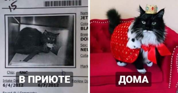 Коты из приютов: снимки до и после обретения семьи