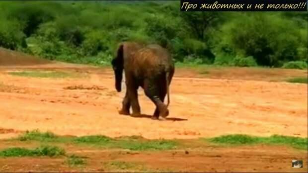 Люди спасли слона из грязи. На кону стояла жизнь животного