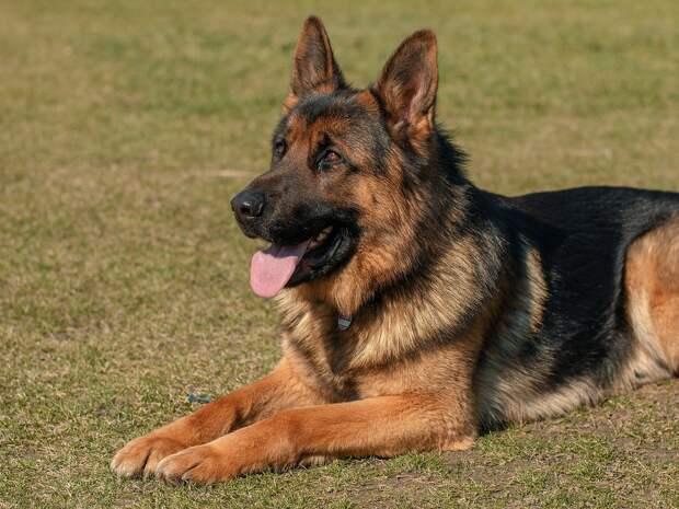 Суд над Ястребом в Удмуртии, премия собаке-полицейскому и хаос в аэропорту Кабула: новости к этому часу