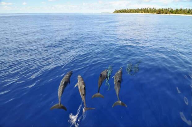Загадочный магический ритуал приманивания дельфинов