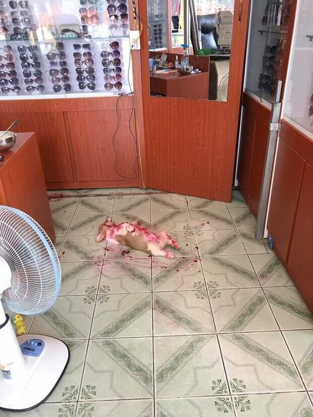 Щенок на полу