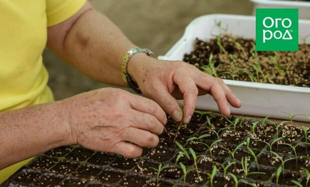 С чего начать садоводство и огородничество: 7 дельных советов