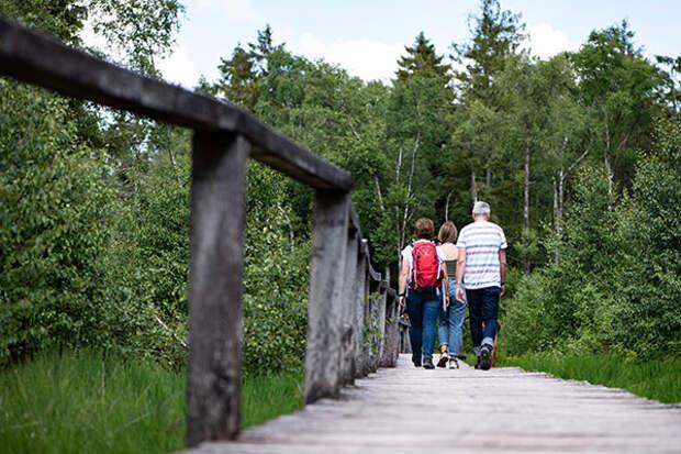 Гуляйте лесом и дышите глубже
