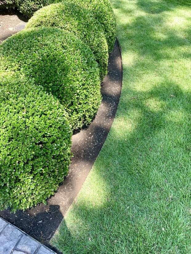 У некоторых действительно бывает идеальный газон!