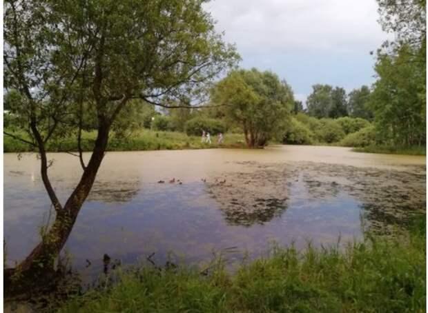 Любители природы из Молжаниновского обеспокоены уменьшением количества уток