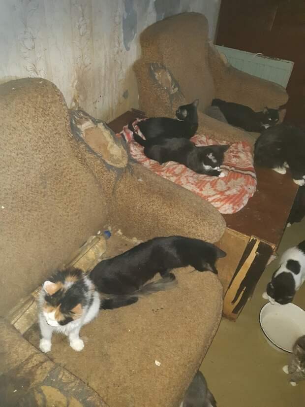Петербуржцы пожаловались на соседку, содержащую более 20 котов в квартире