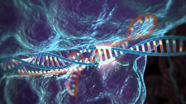 Как исправить человека. CRISPR/Cas9: новейшая система генной модификации, которая обещает изменить нашу жизнь
