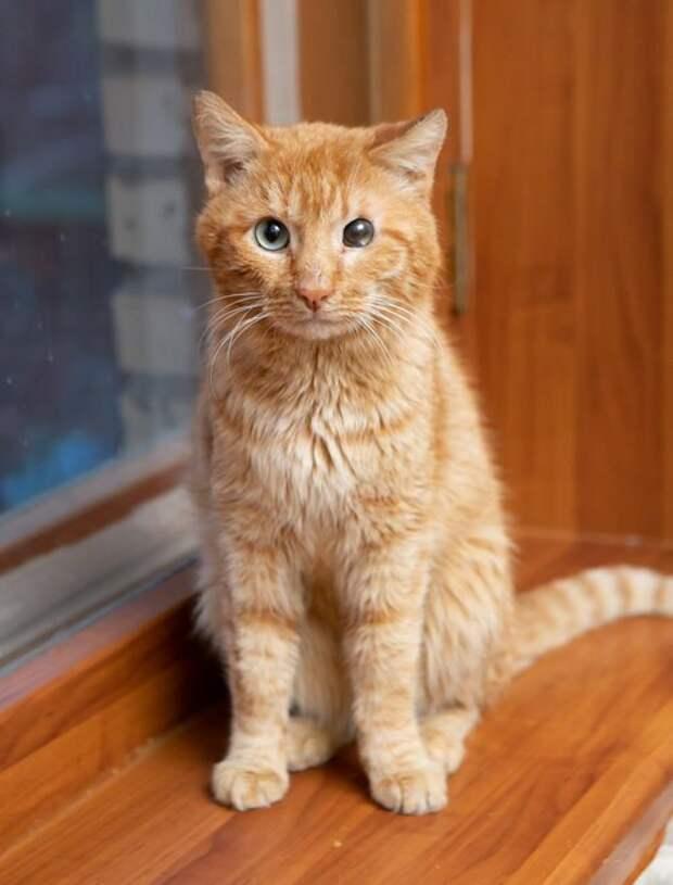 Одноглазый кот Пират ходил и заглядывал по окнам, в надежде обрести дом
