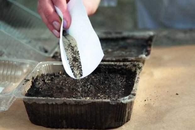 семена перемешанные с песком