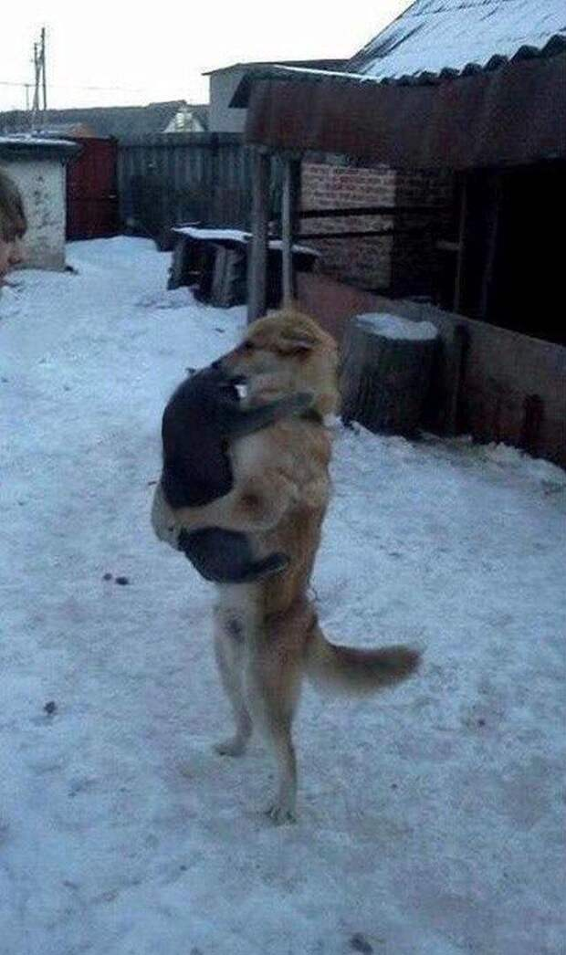 Банда. Кот и собака