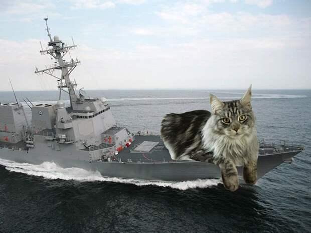 Еслибы котики решили завоевать мир