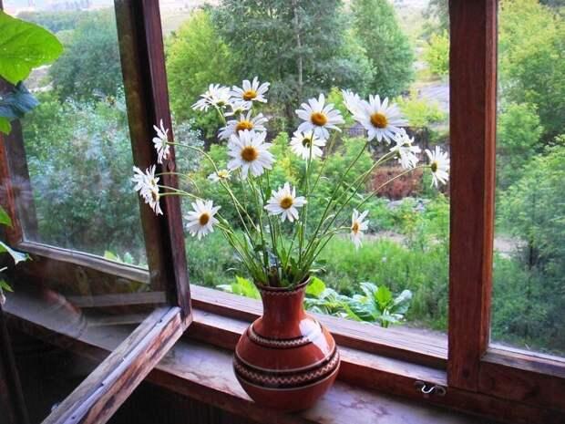 При открытых настежь окнах у нас в доме нет ни одной мухи. Расскажу, чем обработать рамы, чтобы не подпускать их