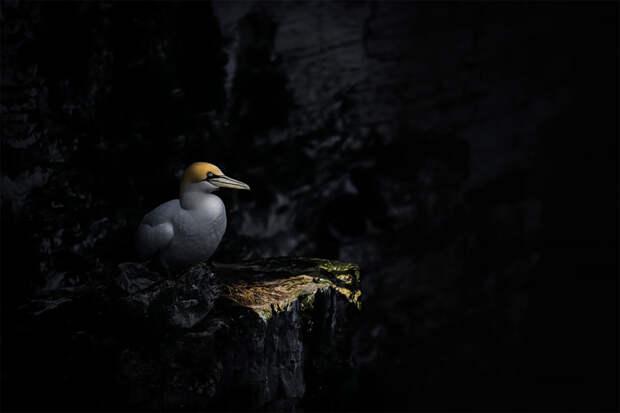 Объявлены финалисты конкурса «Птичий фотограф года — 2018», и фотографии просто песня