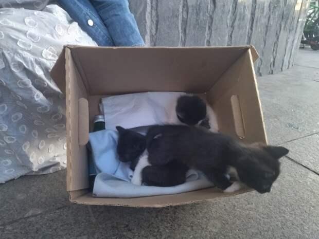 В Щукине троим котятам ищут новый дом