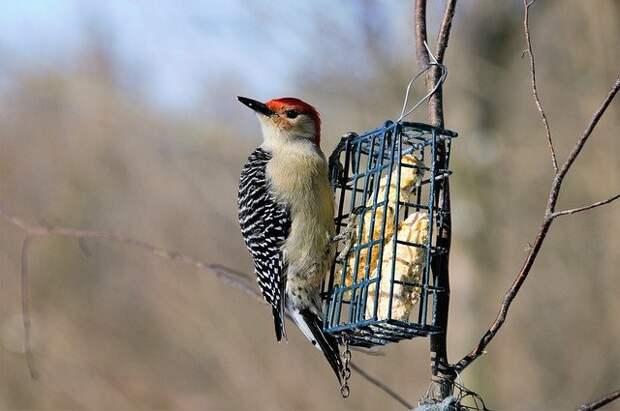 Большинство жителей Северного подкармливают птиц – результаты опроса