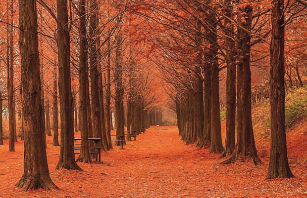 Autumn  by Jo seok Seo on 500px.com