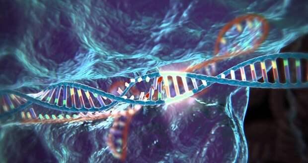 Картинки по запросу генетика человек модификации