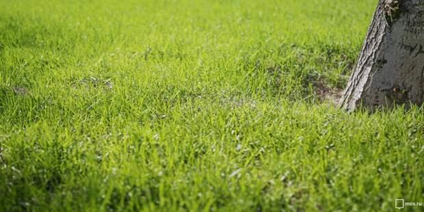 На улице Малыгина восстановили газон