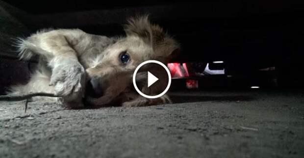 Собачка так сильно была напугана, что даже закрыла глаза лапами...