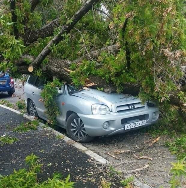 Рухнувшие в Симферополе деревья повредили машины и перекрыли дороги