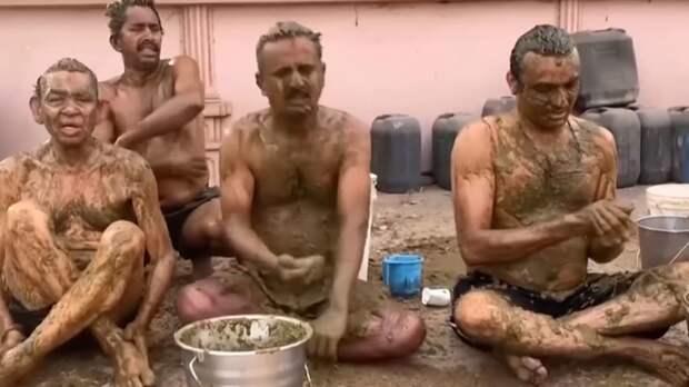 Власти Индии попросили граждан не использовать коровий навоз для лечения COVID-19
