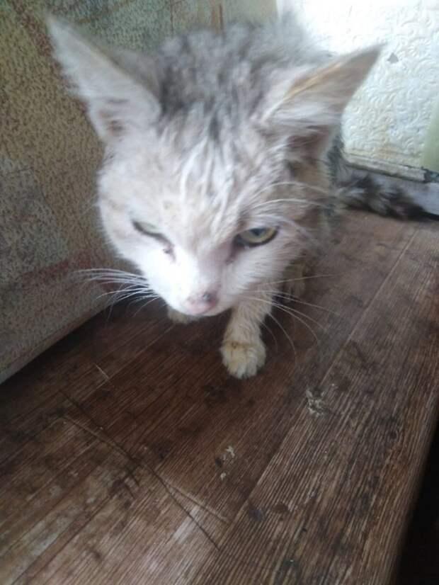 По улицам города из последних сил ковылял худой старый кот