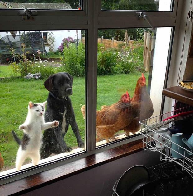 throughwindow15 Нечеловеческое любопытство: что видят в окнах животные