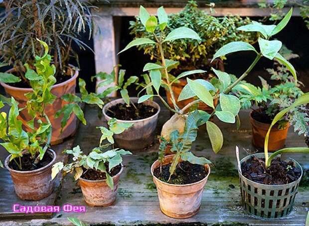 Не надо торопиться: что делать с комнатными растениями в конце зимы и начале весны