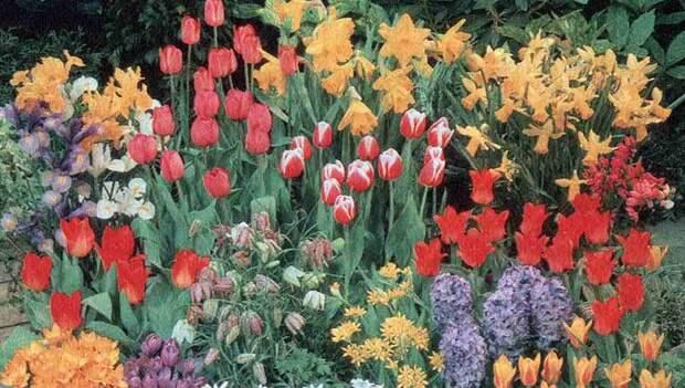 Особенности выращивания многолетних цветов, разведение и ухода за ними
