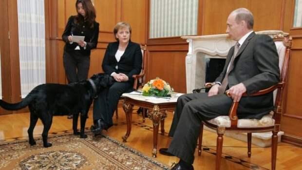 Всё о собаках Путина: где лабрадор Конни, дружит ли Баффи с Юмэ, судьба пуделя Тоси