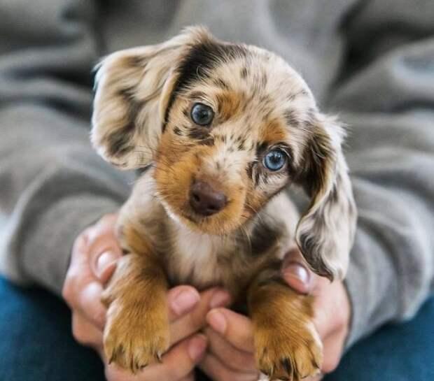 15 самых красивых щенков, которые вызовут у вас умиление