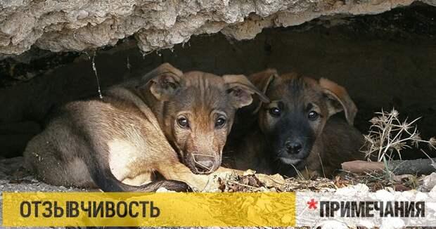 Золотые яйца. Чем губернатору Севастополя не понравился закон о защите животных