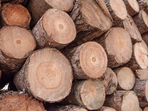 На Кубани закрыли канал контрабанды леса
