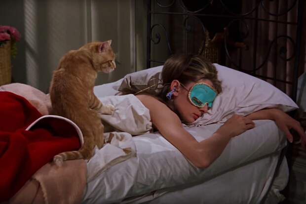 кот по кличке кот