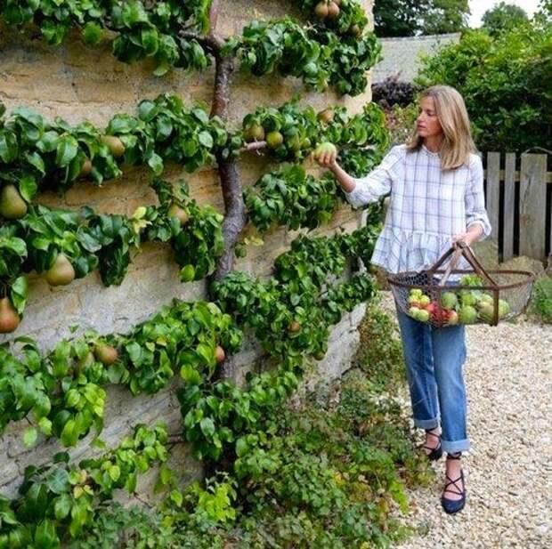 15 живых садовых конструкций, которыми вы будете восхищаться