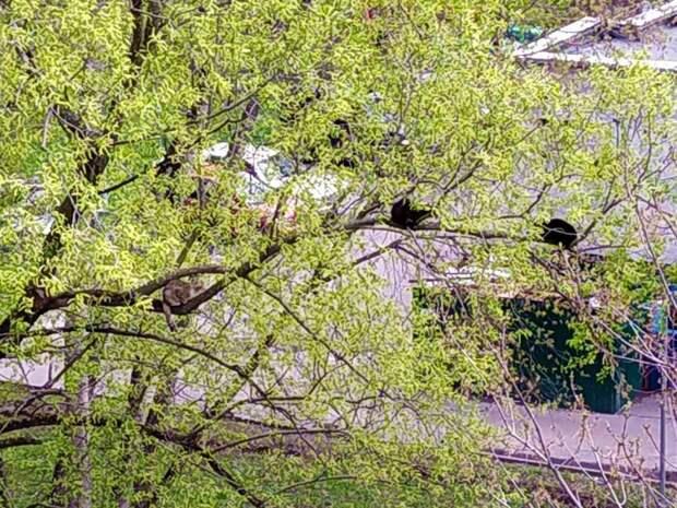 Фото дня: коты оккупировали дерево в Бутырском