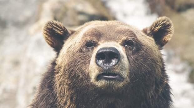 Водитель снял на видео встречу с семейством медведей в Хабаровском крае
