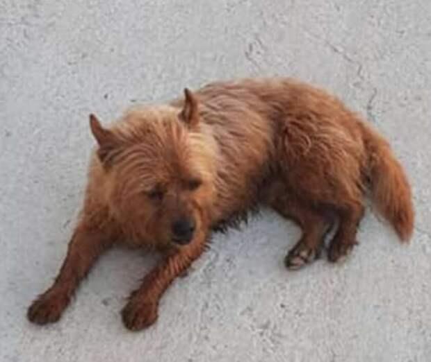 Пёс стал часто убегать из дома, но его не ругают